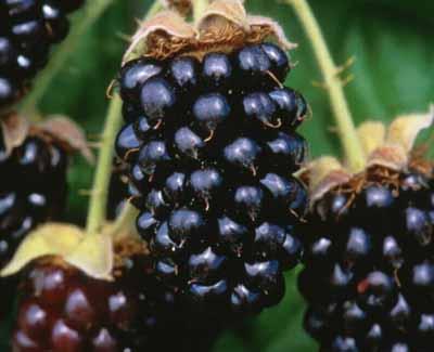 marion-berry1.jpg