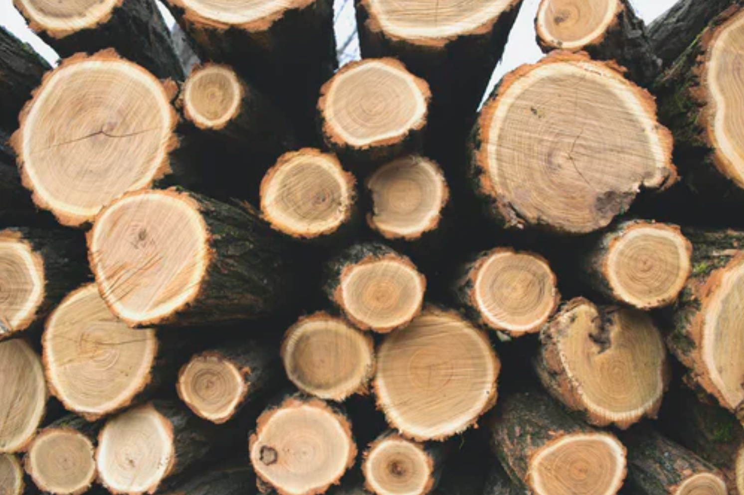 https://naturalresourcereport.com/wp-content/uploads/2021/12/timber-lumber-forest2.jpg